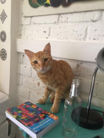 Maracuya Hostel: The lovely cat