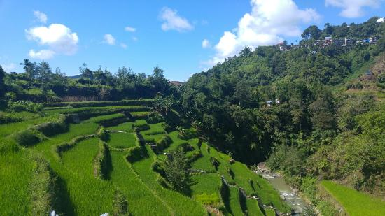 Rice Homestay