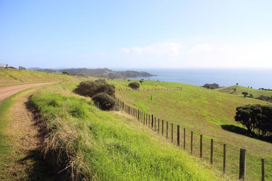เกาะไวเฮเก, นิวซีแลนด์: View of the ocean and fields on the way to Man O'War Winery