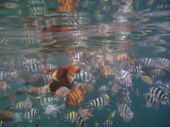 D'Coconut Lagoon : Snorkel tochtje