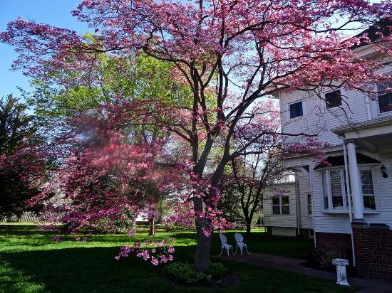 600 Main, A B&B and Victorian Tea Room: Grounds ablaze with color in springtime, pleasant outdoor seating.