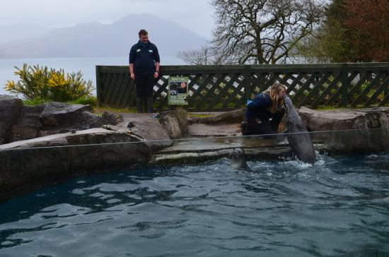 Pippa - Photo de The Scottish SEA LIFE Sanctuary, Oban - TripAdvisor