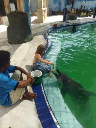 Melka Excelsior Dolphin & Wildlife Resort: 20160426_131915_large.jpg
