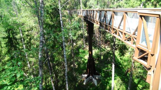 The Treetop Walking Path