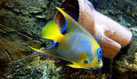 Aquarium Municipal