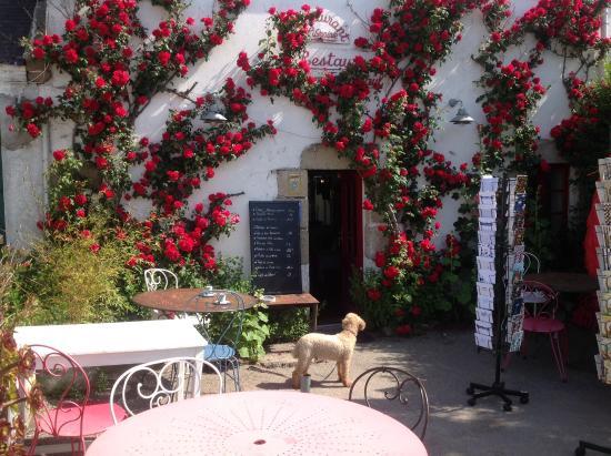 Chez Jean Paul: Jean Paul sous les roses