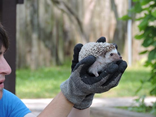 NEW Zoo & Adventure Park: We got to see a presentation on Hedgehogs, which happens to be my son's favorite animal.