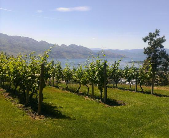 West Kelowna, Canada: View from the vineyard
