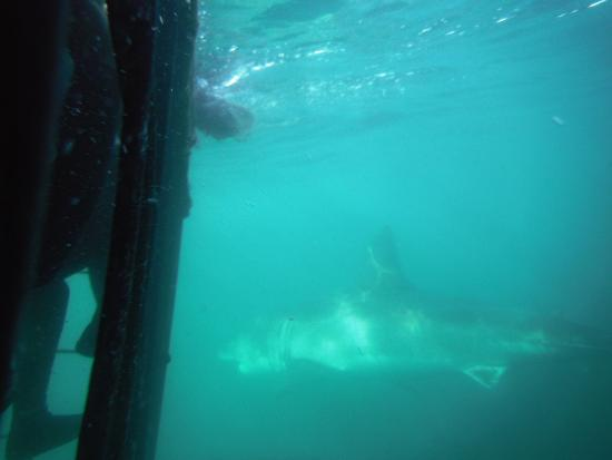 Shark Diving Unlimited照片