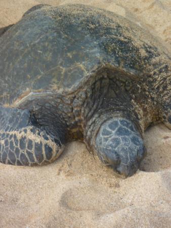 Пайя, Гавайи: Quietly sleeping