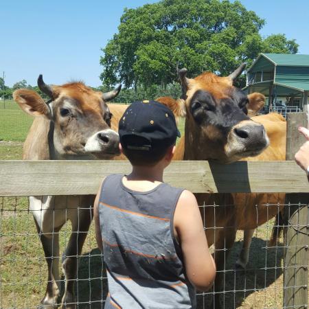 Sweetfields Farm : IMG_20160508_161530_large.jpg