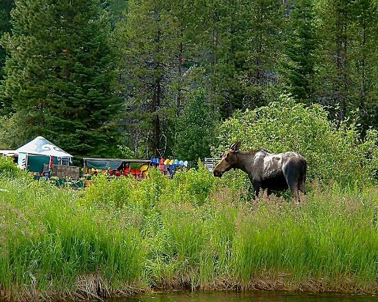 McCall, ID: Moose sigtings!