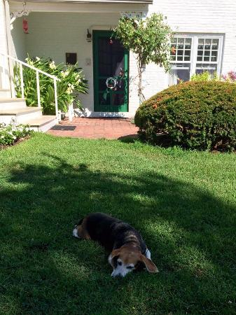 McDaniel, MD: Lucy the Inn's pet dog!