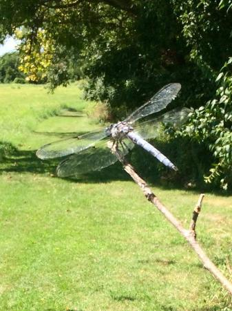 McDaniel, MD: Nature on the trail!