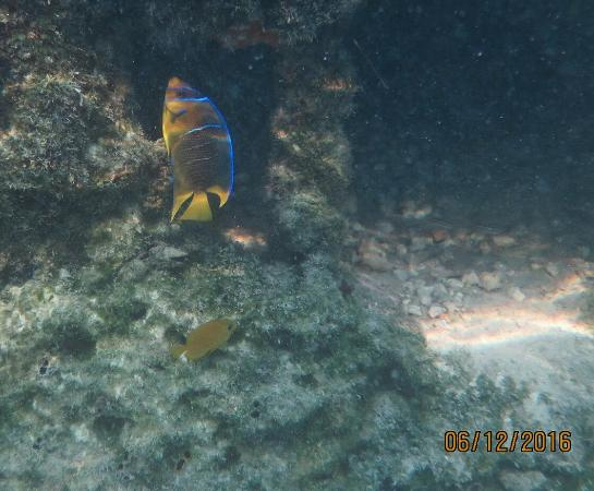 Divers Direct Key West: photo0.jpg