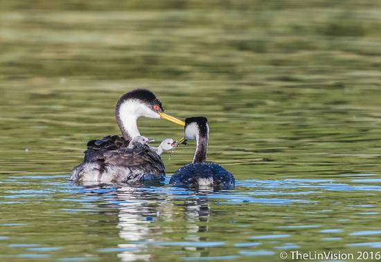 Lakeport, CA: Feeding baby