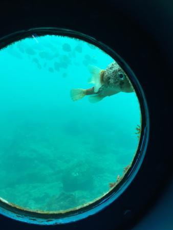 Kushimoto Marine Park Undersea Tower : ハコフグみたいでかわいい魚がいてました