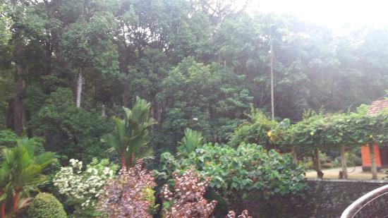 Forest Haven Resort & Vista Rooms: 20160602_065250_large.jpg