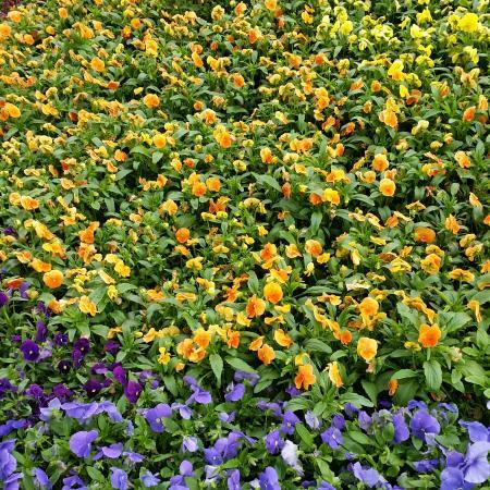 Lund, Swedia: Botanical Gardens (Botaniska Tradgarden)