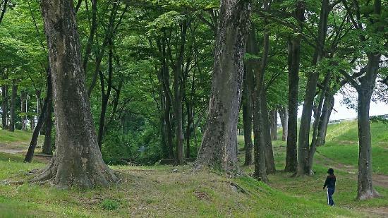 Shingentei Park : 信玄堤沿いの約2kmに及ぶ欅林は、歴史の遺産としての価値があり、武田信玄の残してくれた貴重な遺産でもあります。私もウオーキングに利用させてもらっていますが、真夏でも林の中を川風が流れ、憩いの林