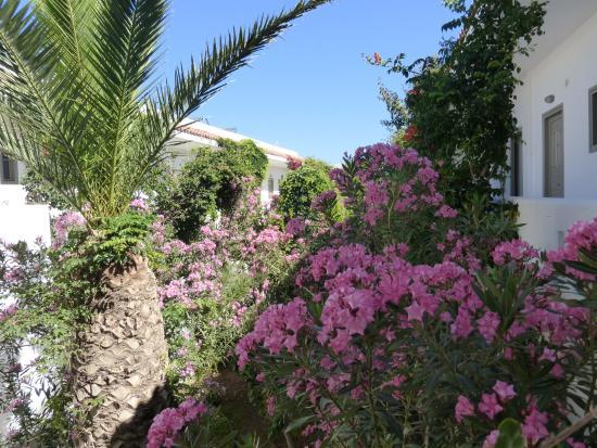 Marino's Beach Hotel Apartments: Garden