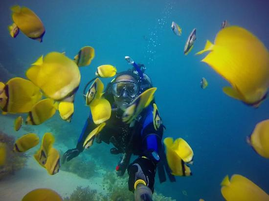 Bwejuu, Tanzânia: Diving Mnemba Island