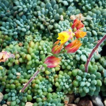 Hermosas las flores de las cactaceas Picture of El Charco del