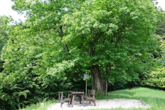 Jubiläumsbaum