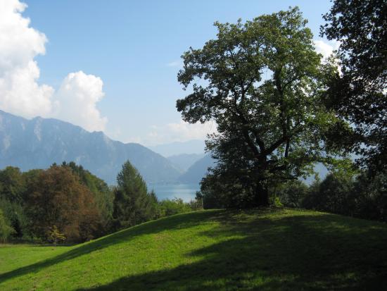 Edelkastanienwald und Waldlehrpfad