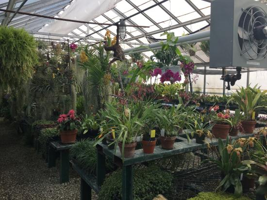 Greenhouses, College of the Ozarks: greenhouse interior