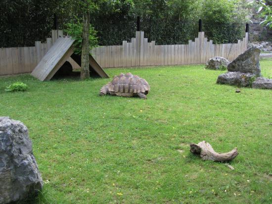 Sorte de sanglier photo de parc zoologique de maubeuge for Zoo exterieur
