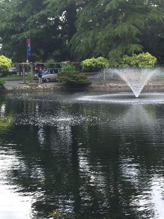 Ascot Limousine Services Tours: The pond