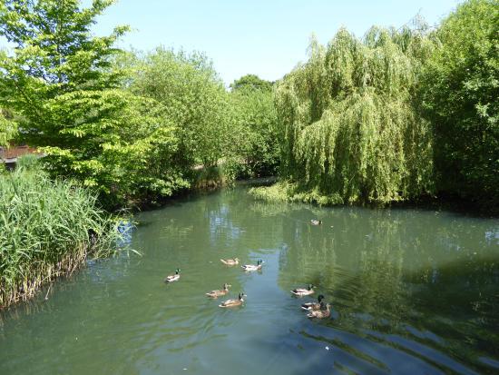 Badwell Ash, UK: Kingfisher lake