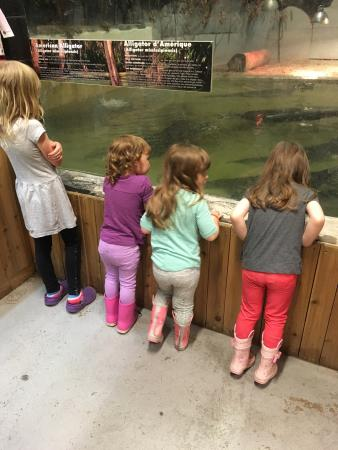 Little ray reptile zoo ottawa coupons