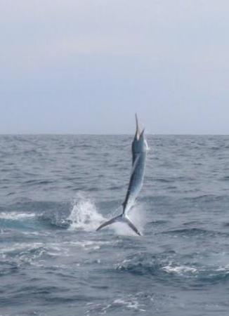 Redrum Sportfishing: Airborne