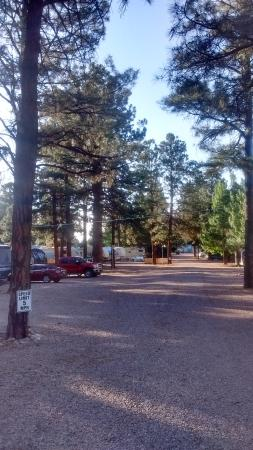 Overgaard, AZ : Tucked back in the pines!