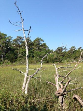 Bald Head Island Conservancy照片