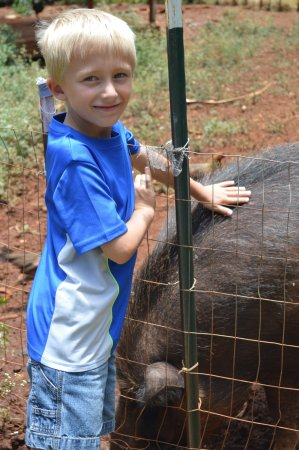 Best of Kauai Tour: Ryder petting Domi's pet boar.