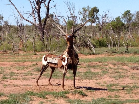 Barcaldine, Australia: The Rusa Deer