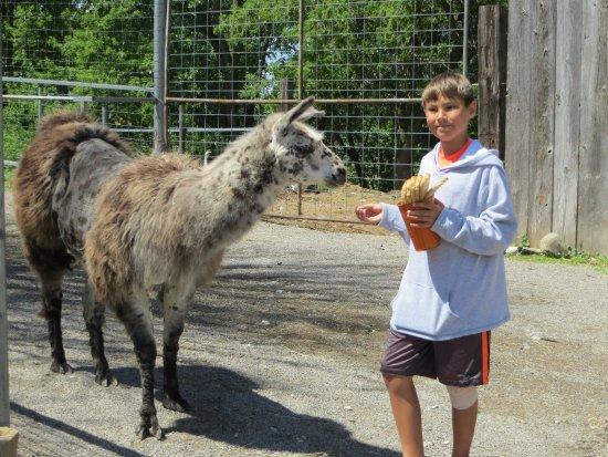 Glacier Ridge Animal Farm