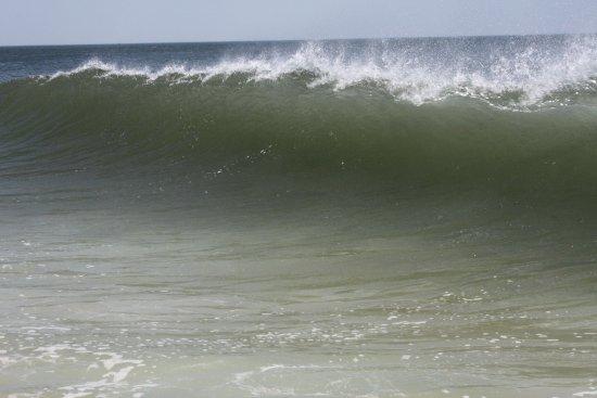 Driftwood Motel: Catch a wave