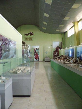Zacapa, Guatemala: Museo de Paleontología, Estanzuelas, Guatemala