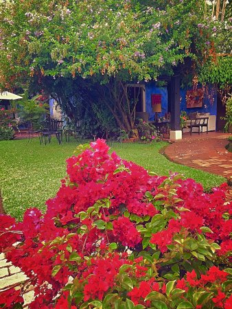 Casa Capuchinas: Jardin