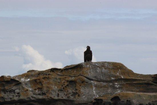 Mayne Inter Island Sea Tours Photo