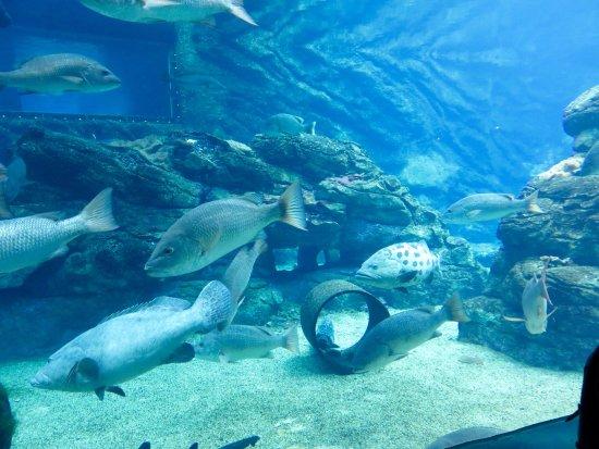 African Penguins Picture Of Ushaka Sea World Aquarium