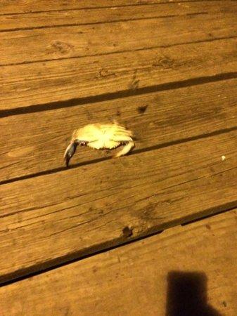 Kure Beach Pier: Crab