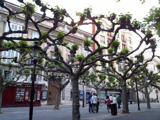 Paseo del Espolón. Ramas entrelazadas de los árboles. - Picture of Paseo del ...