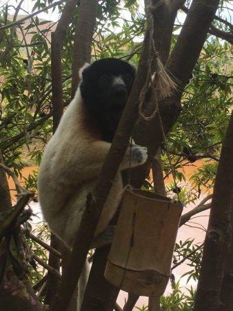 Lemurs Park : photo1.jpg