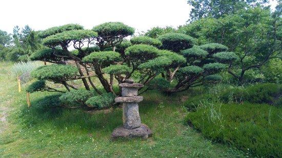 20160611 154825 Picture Of Jardin Zen D 39 Erik