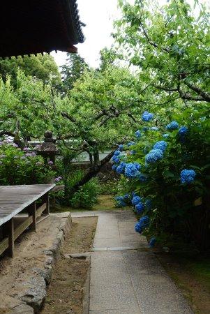 Honkoji Temple: photo2.jpg